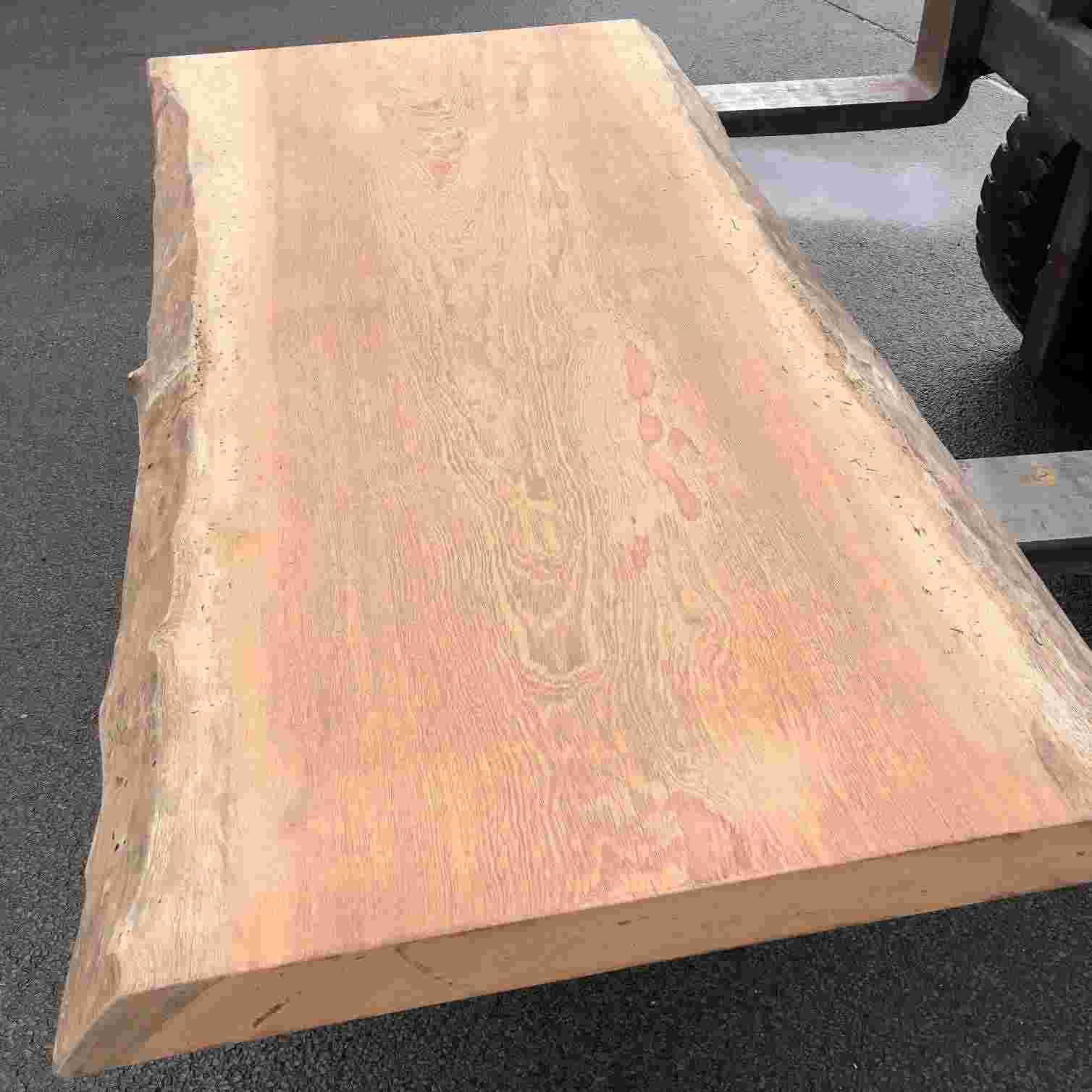 boomstamblad hoofdfoto 2